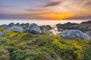 bloemenveld in de buurt van het strand bij zonsondergang foto