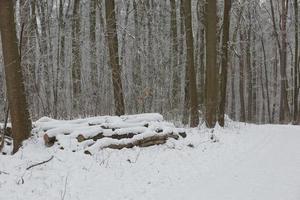 winter boslandschap foto