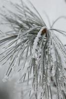 takken van bevroren struiken foto