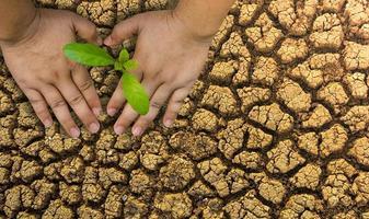 bomen planten, van het milieu houden en de natuur beschermen de planten voeden wereldmilieudag om de wereld er mooi uit te laten zien foto