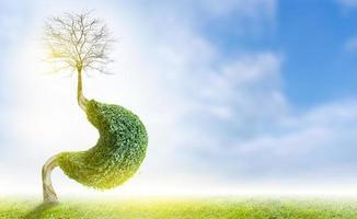 de boom .maag. is een 3d illustratie van het medische milieuconcept. foto