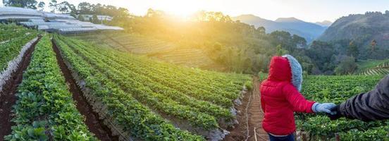 angkhang aardbeienboerderij, provincie chiang mai foto