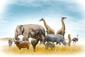 Afrikaanse safari en Aziatische dieren in de thema-illustratie, gevuld met veel dieren, een afbeelding met een witte rand foto
