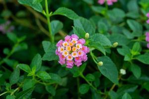 mooie bloemachtergrond, kleurrijke natuur foto