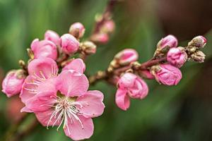 mooie bloemen natuur achtergrond foto