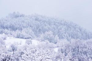 landschap bos in winterseizoen foto