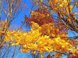 kleuren in de zon bij kweepeerpark redmond of foto