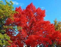 herfst iep in stack park redmond or foto