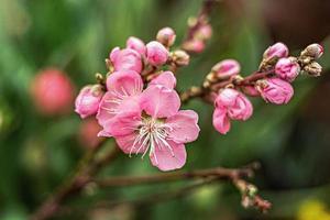 mooie bloemen lente abstracte natuur achtergrond foto