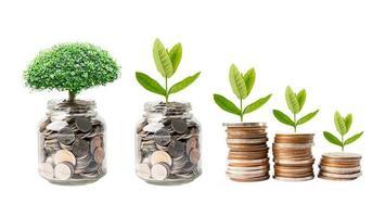 boom pluim blad op geld besparen munten, zakelijke financiën besparing bankinvesteringen concept. foto