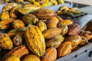 cacao en cacaobonen in kratten te koop foto