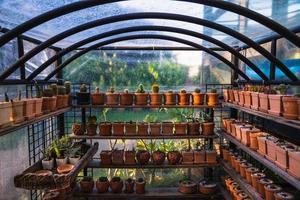 experiment voor het kweken van cactussen op de boerderij. foto