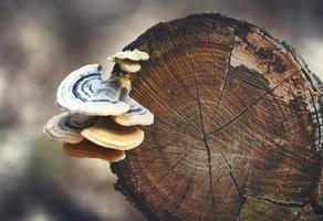 wilde jonge paddenstoelen die op boomstam groeien foto