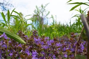 lente bloemen achtergrond met kopie ruimte foto