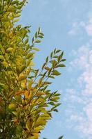 groene boombladeren in de natuur in de lente foto