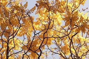 prachtige herfst bos met gele bladeren foto