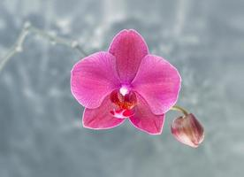 roze orchidee op abstracte onscherpe achtergrond foto