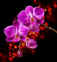 roze orchidee op donkere achtergrond foto