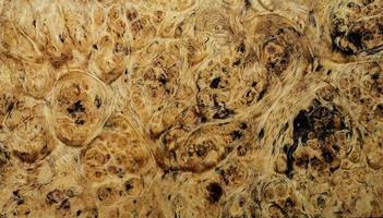natuur wortelnotenhout gestreept foto