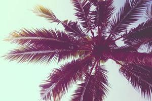 kokos palmboom foto
