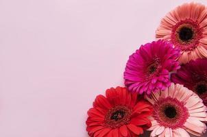 heldere gerberabloemen op pastelroze achtergrond foto