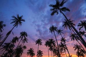 silhouet van kokospalm bij zonsondergang op tropisch strand foto