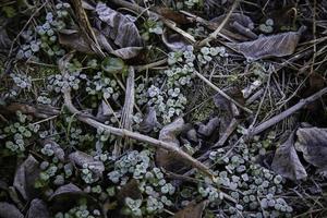 bevroren bladeren in de winter foto
