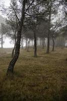donker bos in de mist foto