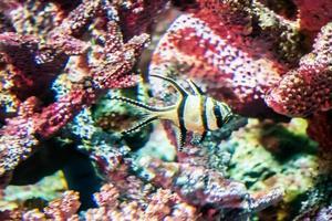 vissen onder water foto