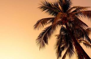 kokospalm met lege lucht en kopieerruimte foto