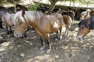 groep paarden foto