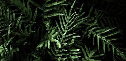 tropische groene bladachtergrond, donker toonthema. foto