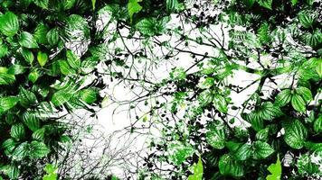 tropische groene blad abstracte achtergrond. silhouet hoog contrast. foto