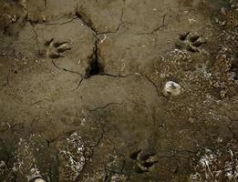 hondensporen op de grond foto