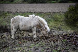 wilde pony veld foto