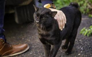 zwarte kat op straat foto