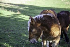 wild paard veld foto