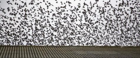 vogels vliegen in de lucht foto
