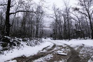 natuurlijk besneeuwd bos foto
