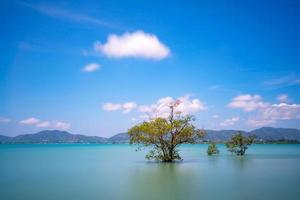 lange belichtingsfoto van mangrovebomen in de zee op Phuket Island foto