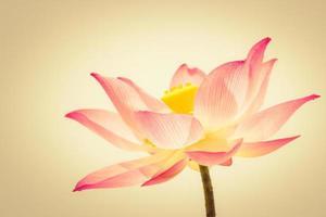 mooie lotus warme toon foto