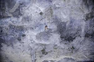 muur met industriële verf foto