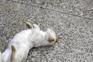 witte kat die op straat ligt foto