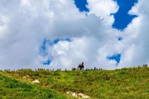 paard op een heuveltop. Dargaville, Nieuw-Zeeland foto