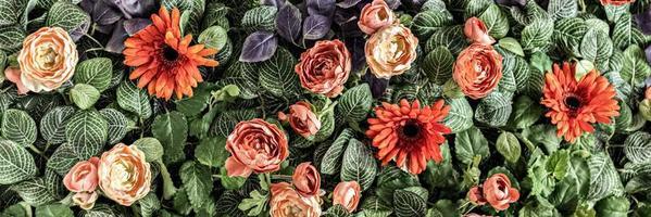 achtergrond van lente kunstmatige rode chrysanten en pioenrozen in de tuin. voorjaar. bloeiende muur.banner foto