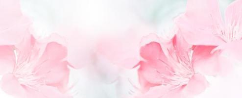 roze rode mooie lentebloem bloei tak achtergrond met gratis kopie ruimte voor wenskaart of omgeving voorblad, sjabloon, webbanner en koptekst. foto
