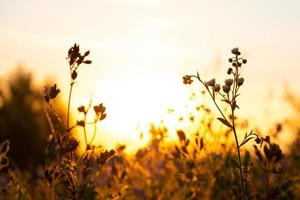 weidegras met prachtige zonneschijn in de ochtend bij zonsopgang foto