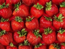 vers geplukte aardbeien, aardbeienachtergrond, seizoensbes foto