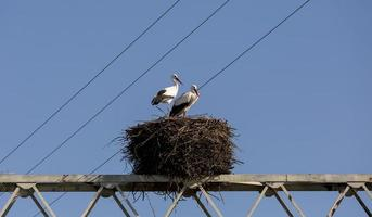 ooievaarspaar in zijn nest in aveiro, portugal foto