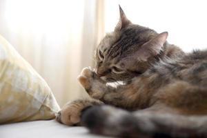 kat in huis foto